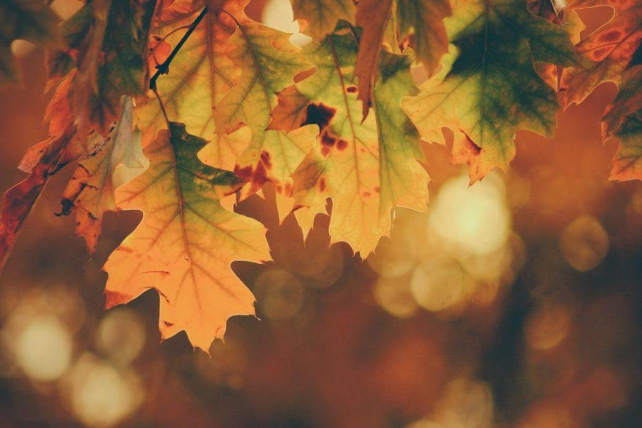 Regalos para otoño