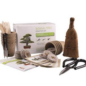 kit bonsai para cultivar arbol
